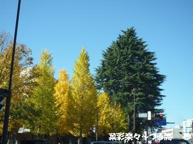 2010.11.11 宇都宮02ブログ.jpg