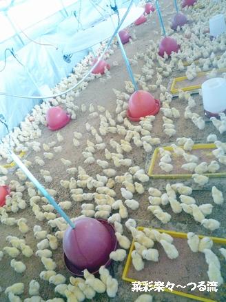 2010.11.11 宇都宮04ブログ2.jpg