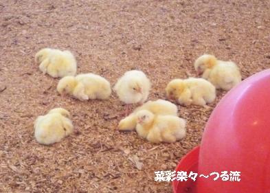 2010.11.11 宇都宮06ブログ2.jpg