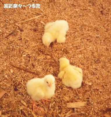 2010.11.11 宇都宮07ブログ.jpg