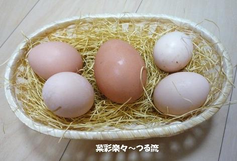2010.12.17 うこっけいブログ.jpg