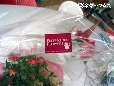 2010.12.17 ピーター02ブログ.jpg
