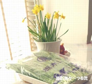 2011.1.19 スイセン2ブログ.jpg