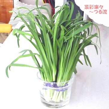 2011.2.8 ニラ01ブログ P1160408.jpg