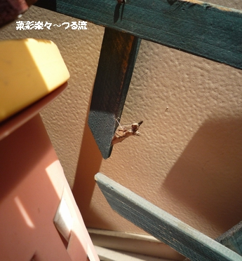 さなぎブログ02 P1170102.jpg