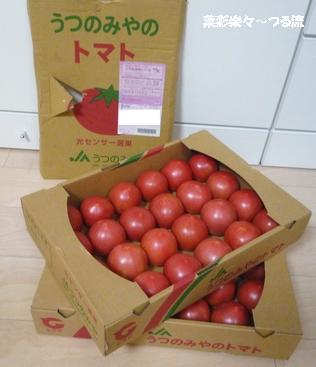 とちぎトマト01 P1190104.jpg