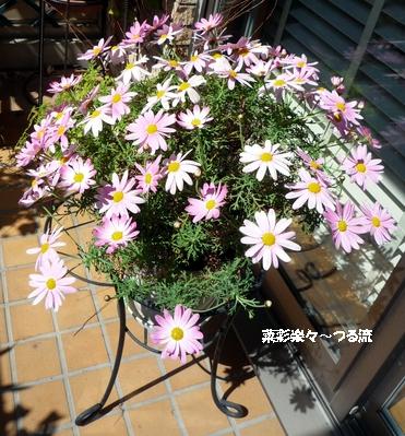 春の花01ブログ P1170058.jpg