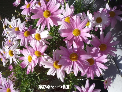 春の花02ブログ P1170056.jpg