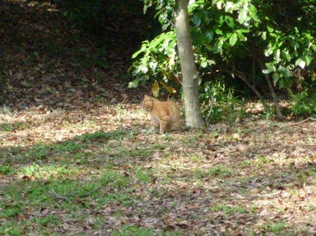 猫01 P1310362 (2).jpg