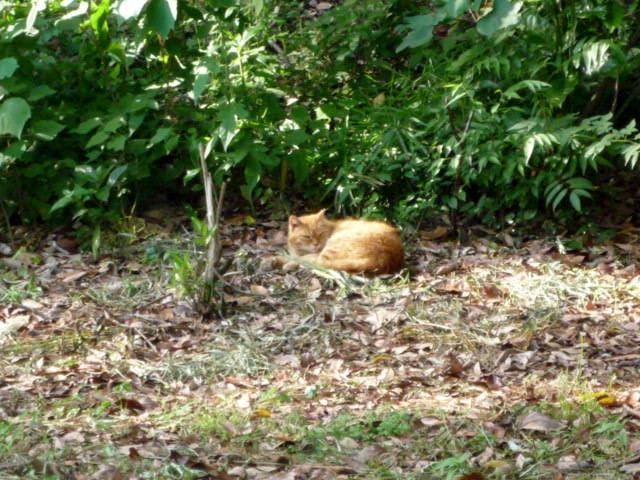 猫6 P1310367 (2).jpg