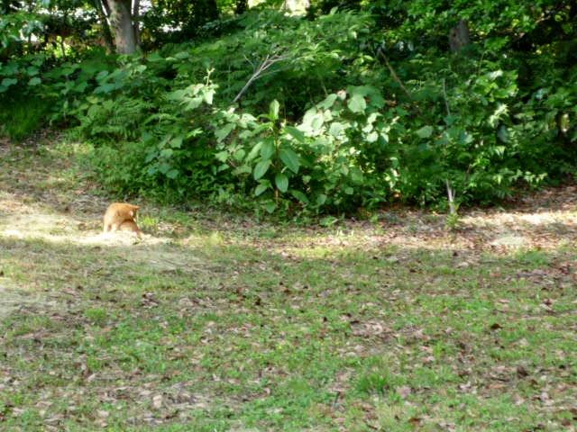 猫2 P1310363 (2).jpg