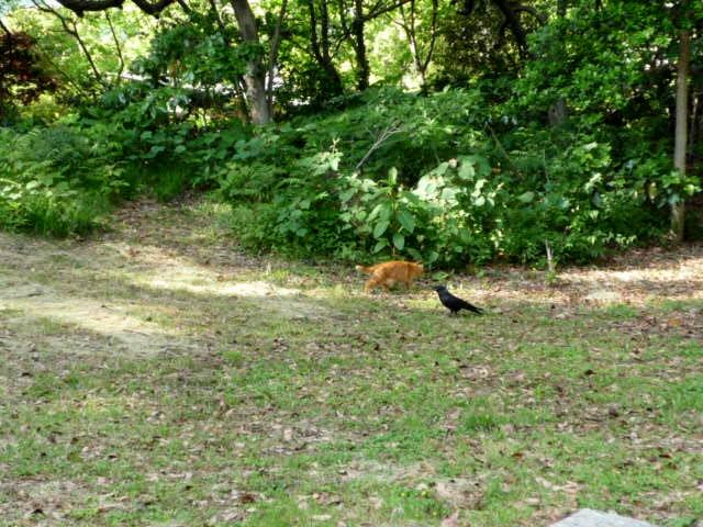 猫4 P1310365 (2).jpg