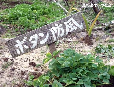 種子島ライフ25ブログ P1160614.jpg