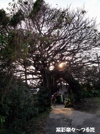 種子島ライブ03ブログ P1160624.jpg