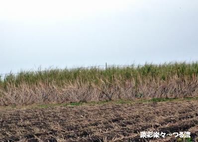 種子島ライブ08ブログ P1160718.jpg