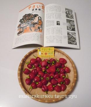 野菜畑02 P1230427.jpg