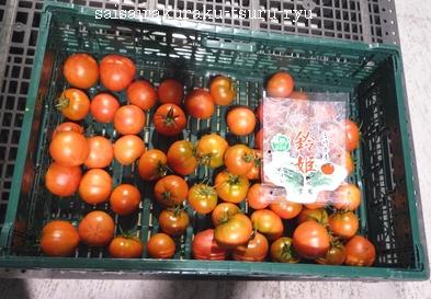 トマト10 P1230619.jpg