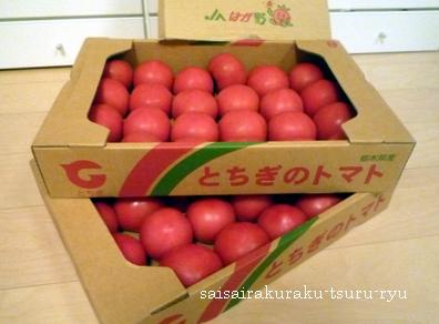 トマト P1260081.jpg