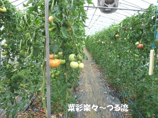 ブログトマト農家03.jpg